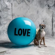 3 foot Big Love Ball with Roxy | Color : Garibaldi | Photo by Bob Garlick