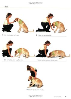 101 Dog Tricks: Step by Step Activities to Engage, Challenge, and Bond with Your Dog: Kyra Sunda ...