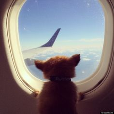 These Jet-Setting Dogs Are On The Vacation You've Been Fantasizing About All Winter