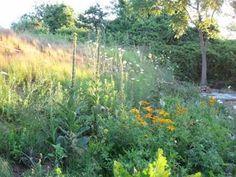 Back garden border, Rob's house