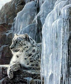 Dios es grande por todas sus maravillas, miran que bonito leopardo de las nieves. More