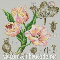 Etude a la Tulipe (Apricot) Cross Stitch Love, Cross Stitch Samplers, Cross Stitch Flowers, Cross Stitching, Cross Stitch Embroidery, Cross Stitch Patterns, Flora Pattern, Lizzie Kate, Blackwork