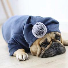 Slow Feeding Food Bowl Type: DogsMaterial: PlasticBrand Name: LanLan Yorkshire Terrier, Shih Tzu, Pitbull, French Bulldog Clothes, Fat Dogs, Dog Jacket, Jacket Style, Golden Retriever, Winter Hoodies
