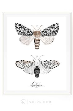 Lepidoptera Study Vol.3 Reverie Collection | Scientific Cotton Canvas Art Print in 4 Sizes | VPR09P  zackswimsmm.tk