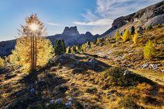 Behind the Larch by Martin Rak on 500px Dolomites...Italia..