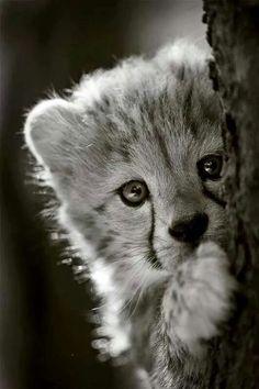 Sweet Baby Cheetah :)