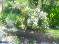 Shining flowers.
