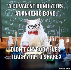 chemistry-cat-meme-generator-a-covalent-bond-yells-at-an-ionic-bond-didn-t-anybody-ever-teach-you-to-share-3ad3fd.jpg (510×504)