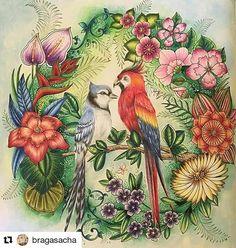 Perfeito demais! #Repost @bragasacha with @repostapp Magical Jungle - finished  E esses galinhos fofos que eu vi uma vez num trabalho da Rô e sempre quis fazer?? 😍😍😍 Aquarela, pva branca, polychromos e caneta posca.  #lostocean #magicaljungle #selvamagica #johannabasford #enchantedforest #secretgarden #tropical #magicaljungle #johannabasford #colorpencil #fabercastellpolychromos #polychromos #coloringbook #coloring #colorist #art #bluejays #florestaencantada @enchantedforestcolouring…