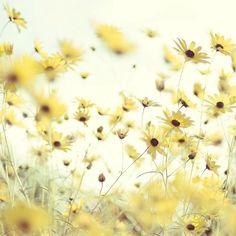❁ Soft Yellow ❁ Pale Yellow ❁ Pastel Yellow ❁ Light Yellow ❁ Lemon ❁ Spring Flowers