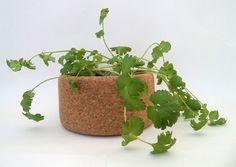 Grow cork Life in a bag