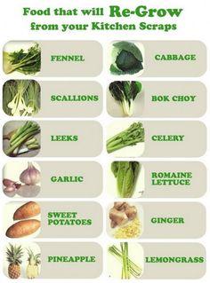 Os alimentos que irá regredir a partir de restos de cozinha