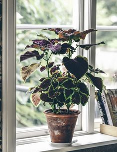 Indoor Gardening Quick, Clean Up, And Pesticide Free - Make Your Own Palettblad. Green Plants, Potted Plants, Indoor Plants, Cactus, Belle Plante, Pot Plante, Plants Are Friends, Green Life, Indoor Garden