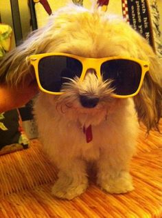 """This cool dude kept it casual all day today. 