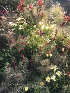 RHS Chelsea Radio 2 feel-good garden: & # The Jeremy Vine Texture Gard . RHS Chelsea Radio 2 feel-good garden: & # The Jeremy Vine Texture Gard … – All about Perennials Fabric, Full Sun Perennials, Fall Perennials, Amazing Gardens, Beautiful Gardens, Plant Wall Decor, Prairie Garden, Australian Garden, Chelsea 2017