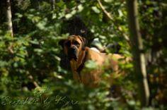 Peeping Bruiser - Snapshots by Kyra