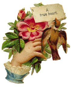 A True Heart