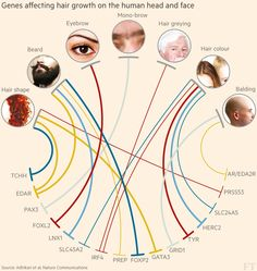 Mar 1 2016: Grey hairs, monobrows and poorly judged comb-overs could be consigned to history after research led by British scientists revealed how our genes affect hair growth on the human head and face