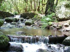 Parque Nacional Garajonay En La Isla De La #Gomera