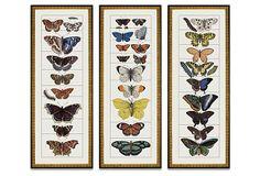 Butterfly, Set of 3 on OneKingsLane.com