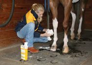 40 Horse Grooming Tips - get your horse looking like a million dollar show horse. #horsegrooming #cowboymagic