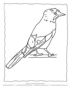 Bird Coloring Page Eurasian Jay From Echos Field Guide Study At Wonderweirded