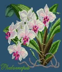 Elizabeth Bradley | Needlepoint Kits Exotics - The Beaumaris Collection - Browse By Kit Collection - Shop (USA)