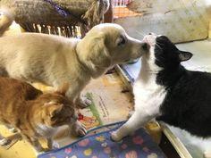 里親さんブログもっともっとイデホ - http://iyaiya.jp/cat/archives/76075
