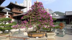 Chi Lin Nunnery (Kowloon) - Photo taken by BradJill