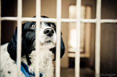 """The law will work to reduce the mass-breeding of pets in """"puppy mills"""" and """"kitten factories."""""""