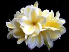 yellow/white plumerias