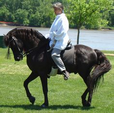 A Lippit Morgan stallion. This bloodline is considered the purest.