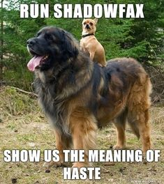 Run Shadowfax, show us the meaning of haste!