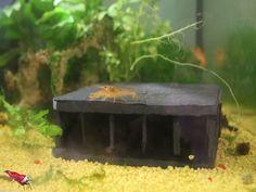 Höhle für CPO -  Aquarium Deko Haus Versteck Natur Schiefer in Haustierbedarf, Fische & Aquarien, Dekorationen   eBay