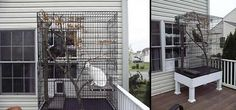 Let kitties enjoy being outside safely with DYI cat enclosures.