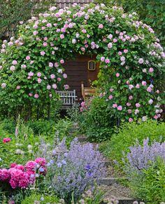 Romantischer Rosengarten mit einer blühenden Kletterrose 'Constance Spry' am Rosenbogen