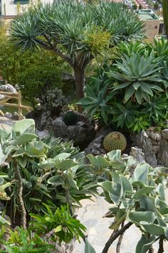 Jardin exotique de Monaco / Blog et photos Lejardindeclaire