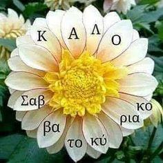 Good Afternoon, Good Morning, Plants, Happy, Buen Dia, Bonjour, Ser Feliz, Plant, Good Morning Wishes