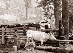 37 Lovely Photos That Show Farm Ladies Over 100 Years Ago ~ vintage everyday Old Pictures, Old Photos, Vintage Photos, Vintage Photographs, Antique Photos, Agriculture, Farming, Milk The Cow, Pioneer Life
