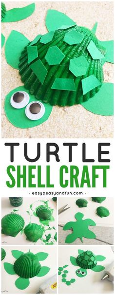 Adorable Seashell Turtle Craft for Kids