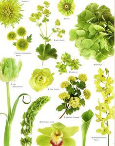 Wedding Flowers by Color:  Green ................................ (Courtesy Martha Stewart Weddings Planner)