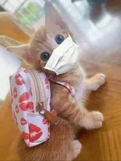 Cute Baby Cats, Baby Kittens, Cute Funny Animals, Cute Baby Animals, Cats And Kittens, Funny Cats, Cute Babies, I Love Cats, Cool Cats