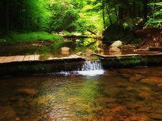 Small Stream in Tioga County, PA