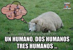 Contar ovejas para dormir y viceversa