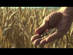 Food Matters: Official Trailer