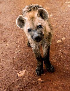 llbwwb:  hyena cub2 (by dogbisket)