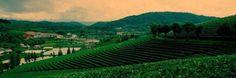 No.7-Pu'er (South Yunnan) | Top 9 Destinations Of Yunnan During Spring Festival