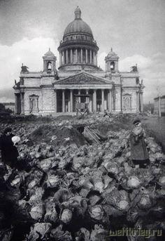 Блокада Ленинграда. огород с капустой на клумбе перед Исаакиевским собором
