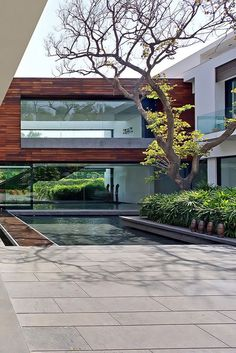 Contemporary house, architecturally designed around the pool. White and timber external walls with huge glass windows.