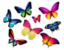 Many Different Butterflies On White Background - Download From Over 65 Million High Quality Stock Photos, Images, Vectors. Sign up for FREE today. Image: 28072834